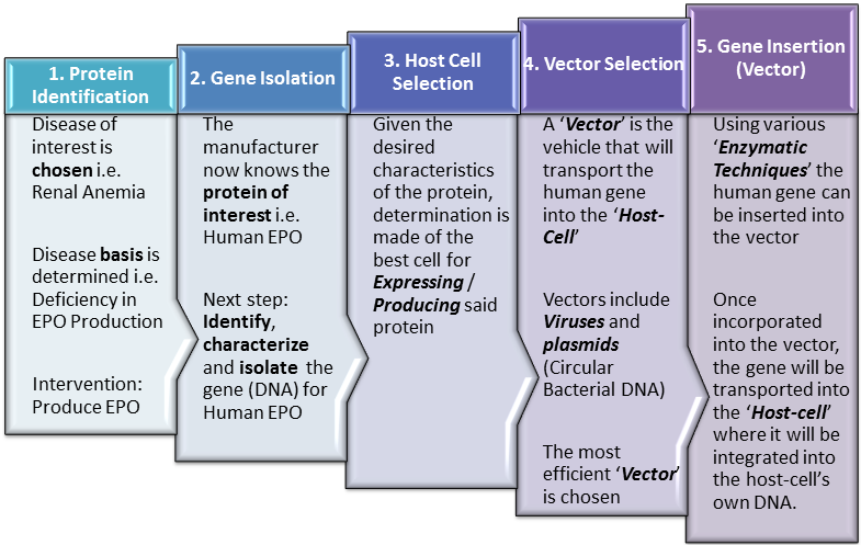 Biopharmaceutical Production Steps 1-5