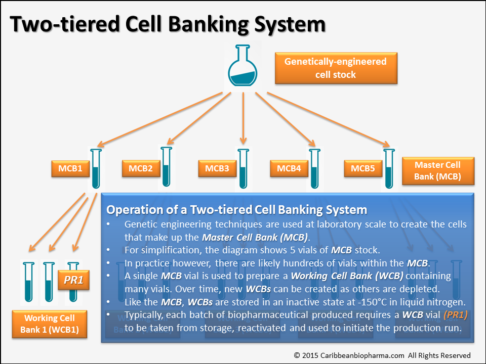 Diagram of Two-tiered Cell Banking System
